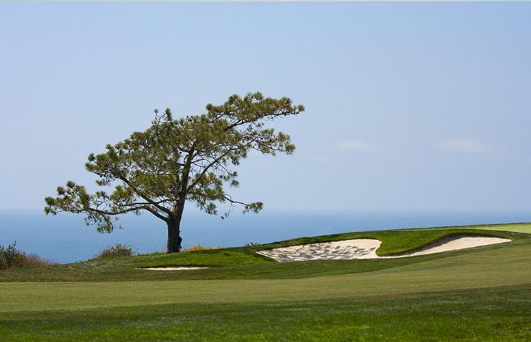 Sand trap overlooking the Pacific Ocean.